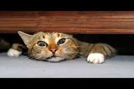 funny cat videos pictures of cat under bed