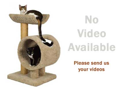 best cat trees reviews image for no video available for the Molly & Friends M34