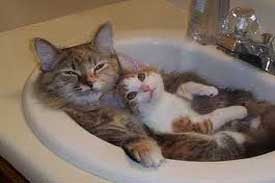 funny cat videos pictures of a mother and baby cat in sink
