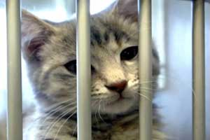 adopt shelter cat named chester
