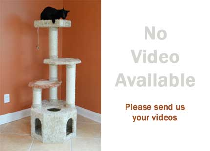 best cat trees reviews image for no video available for the Armarkat X5703