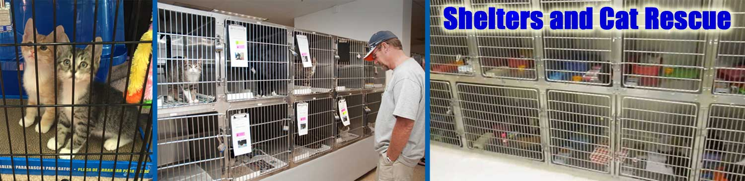shelter cats adoption holding area