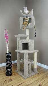 "No. 4 New Cat Condos 72"" PlayStation"