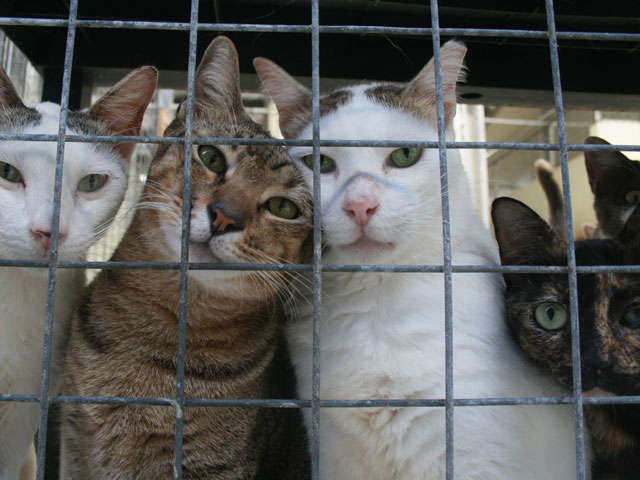 four cats in a shelter cage