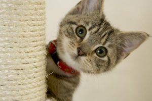 shelter kitten with scratching post