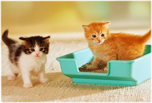 two shelter kittens in a litter box