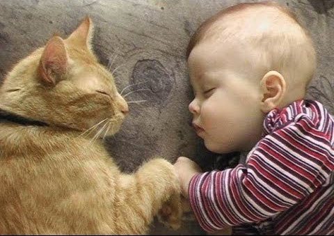 cats and newborns sleeping