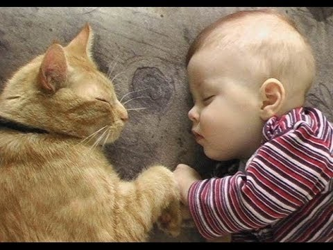 cats and newborns sleeping together