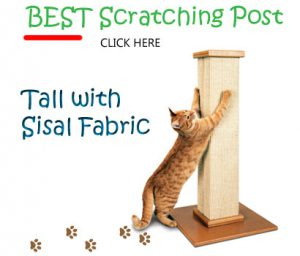 tall cat scratching posts