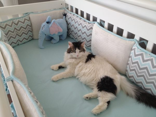 cat in newborns crib