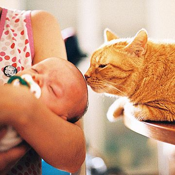 cat smelling babies head