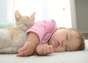 cat and baby sleeping together