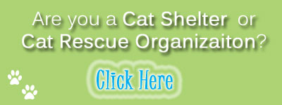 adopt shelter cat green button