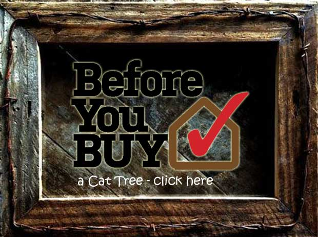 before you buy a cat tree