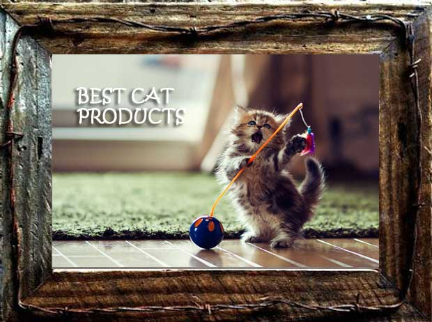 best cat products kitty