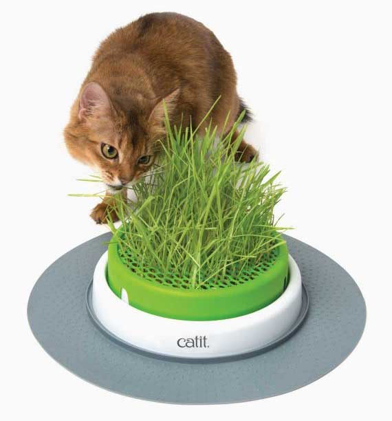 catit garden cat with grass