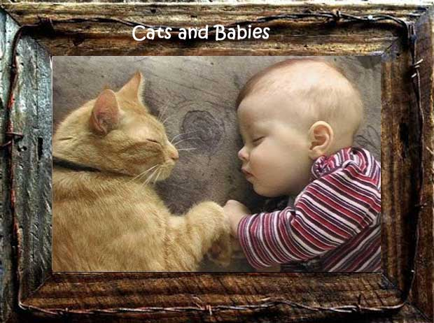 cats and newborns