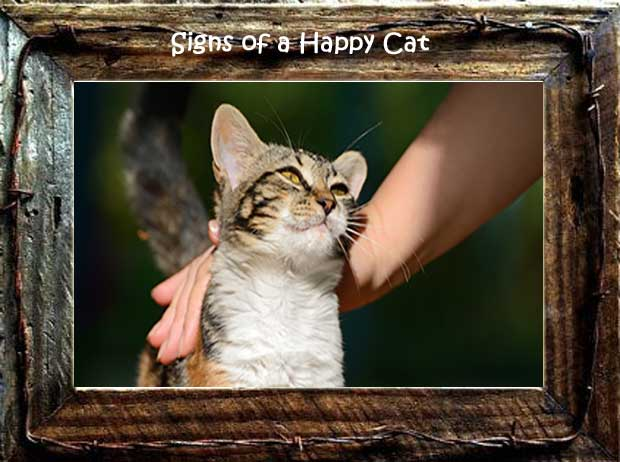 signs of a happy cat in frame