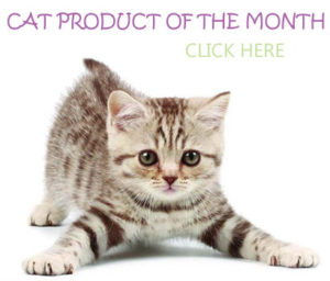 cat product of the month