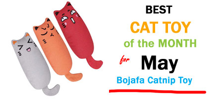 Bojafa catnip toy product of the month