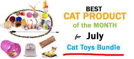 cat toys bundle product of the month